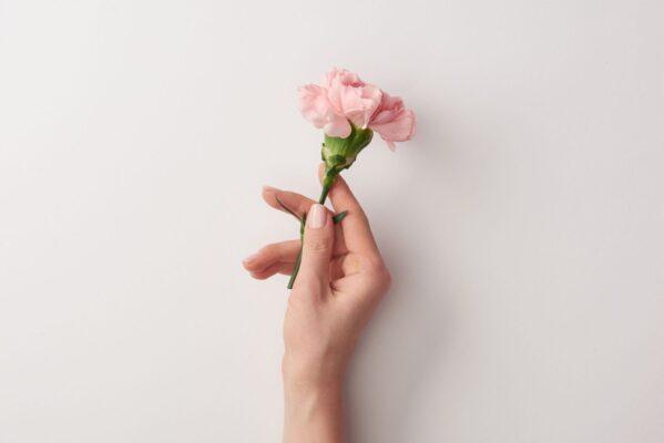 Flor de Cada Signo: Descubra Agora!